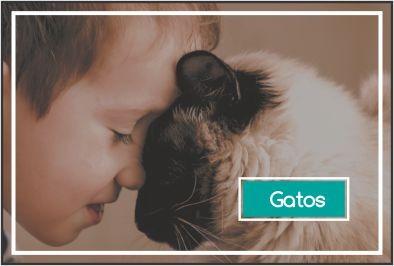 rações, petiscos e mais para gatos